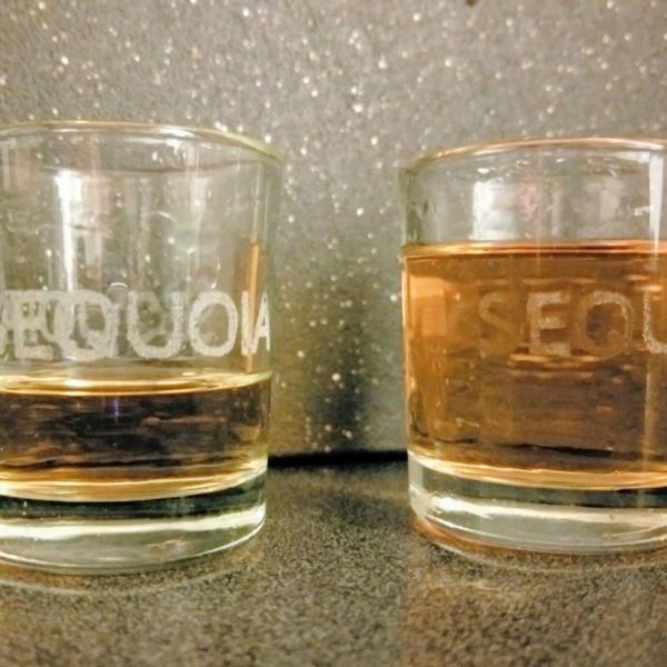sequoia_shot_glass
